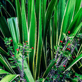 Canary green. Plant lover concept - 206680094