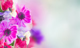 anemone flowers in garden - 206723260