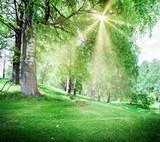 Spring park landscape - 206738205