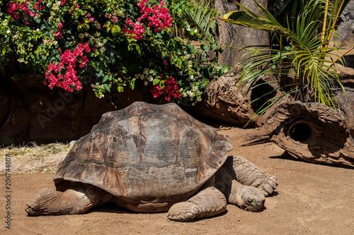 Aluminium Schildpad Eine große Schildkröte genießt die Sonne.