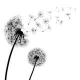 Abstract black Dandelions, dandelion with flying seeds – stock vector