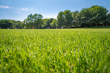 Grüne Wiese in einem Park im Sommer