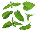 Melissa leaf or lemon balm isolated on white background with copy space for your text. Top view. Flat lay pattern - 206749491