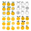 Set of oranges fruits vector illustration - 206780643