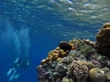 Divers on the reef - 206782677