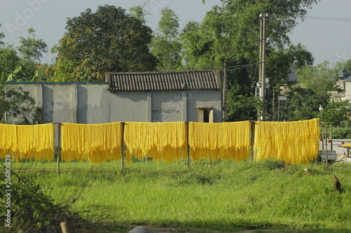 Canvas Honing Hanoi, Vietnam,: arrowroot vermicelli- a special Vietnamese noodles are being dried on bamboo fences going along the roads in Cu Da Village ( one Old village in Hanoi)