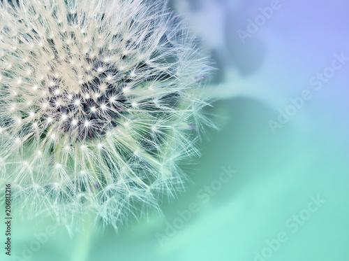 Canvas Paardenbloemen Dandelion. Dandelion close up on abstract blurred background