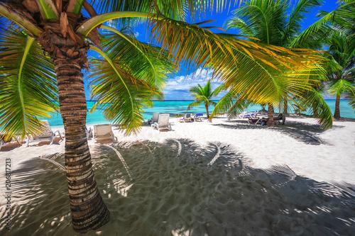 Palmtree and tropical island beach Saona