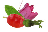 hip with flower anf leaves of dog rose isolated - 206823238
