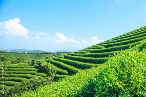 Fotobehang Pool Green tea garden on the hill,china