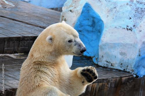 Aluminium Ijsbeer Polar bear water