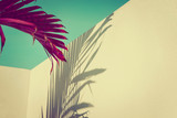 Purple palm leaves against turquoise sky and white wall. Vivid colors, creative colorful minimalism. Copy space for text - 206841435