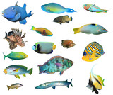 Collection tropical reef fish isolated. Fish species cutout on white background - 206850402