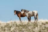 Wild Horses - 206851662