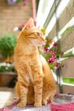 Eine rote Katze schaut interessiert in ihre Umgebung