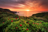 Magnificent sunrise view with beautiful wild peonies on the beach near Tylenovo, Bulgaria - 206875215