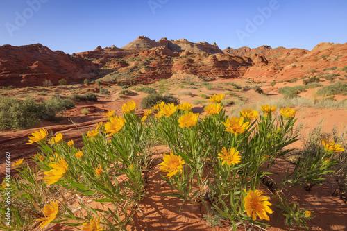 Fotobehang Oranje Spring scene in the Arizona desert, USA.