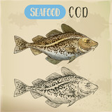 Sketch of atlantic or pacific cod, fish or seafood - 206891856