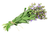 bunch of sage isolated on white background - 206893216