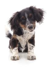 Shaggy Small Dog Sticker