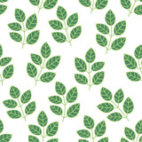 Green foliage seamless pattern. Floral background with branches and leaves. Vector illustration.  - 206915039