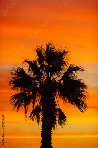 palm tree silhouette against sunrise background