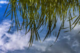 Schilfhalme spiegeln sich im Teich - 206935200