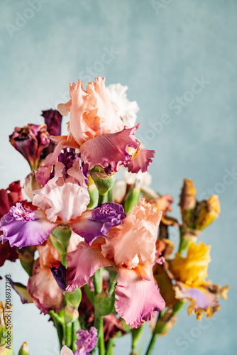 Aluminium Iris Bunch of coloful fresh irises