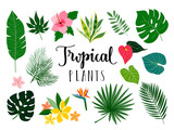 Tropical isolated plants and flowers collection