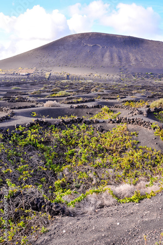 Aluminium Lavendel Landscape in Tropical Volcanic Canary Islands Spain