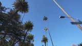 Palm Trees Driving Plate Front Low Angle - 206954058