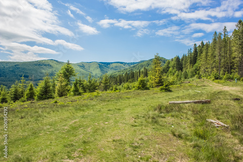Fotobehang Pistache green summer forest mountain landscape somewhere on country side