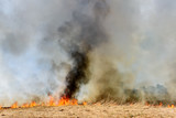 Global Warming. Burning agricultural field, smoke pollution. Image of global and their natural disaster risk. - 206973894
