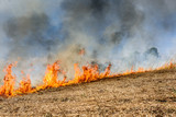 Global Warming. Burning agricultural field, smoke pollution. Image of global and their natural disaster risk. - 206974091