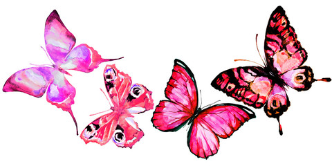 beautiful pink blue butterflies,watercolor,isolated on a white