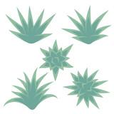 Set of succulent plant, bush, flower isolated on white background. Vector illustration. - 206985206