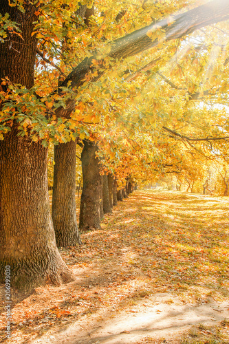 Fotobehang Oranje Autumn leaves on a tree in a park background