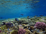 Wonderful and beautiful underwater world with corals and tropical fish - 206996273