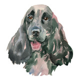 The English Springer Spaniel watercolor hand painted