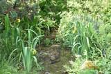 Iris des marais jaune
