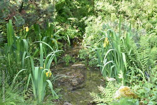 Aluminium Iris Iris des marais jaune