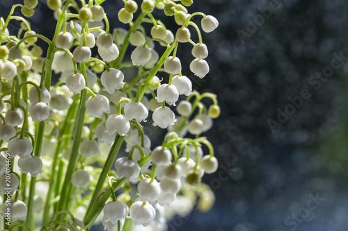 Fotobehang Lelietjes van dalen An image with lilies of the valley.
