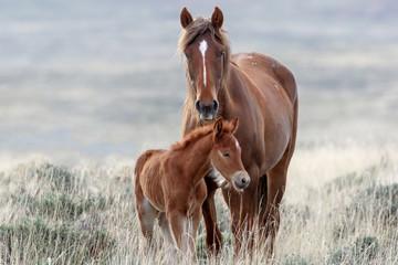 Wild Horses © Ronnie Howard