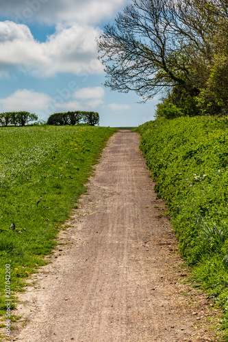 Canvas Zalm A Pathway through Fields