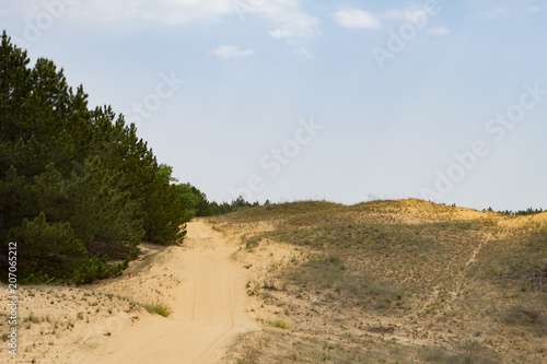 Fotobehang Beige landscape in oleshky sands, desert in Ukraine