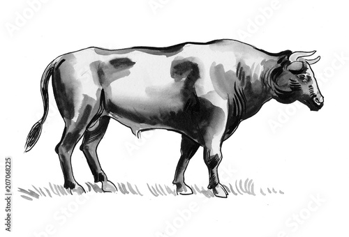 Ink and watercolor sketch of a big black bull