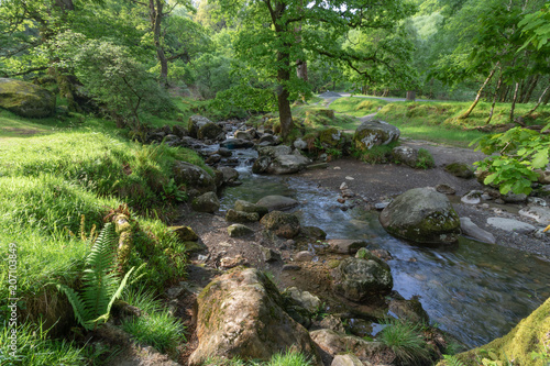 Fotobehang Betoverde Bos Flowing waterstream in the forest, waterfall, wet stones, green moss, vivid green scenery, enchanted forest