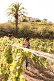 Two people standing in the vineyards - 207125655