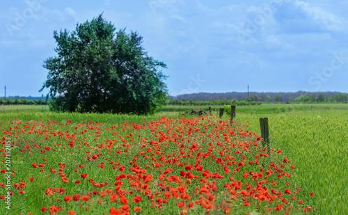 Aluminium Klaprozen Wonderful poppy field