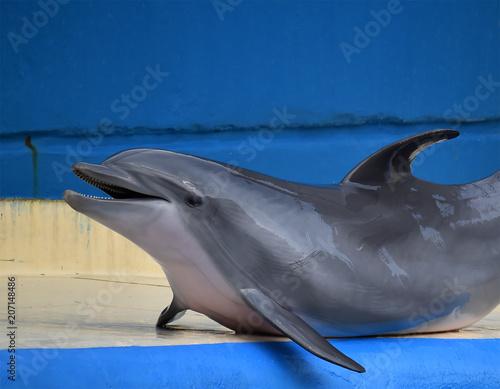 Aluminium Dolfijn delfin
